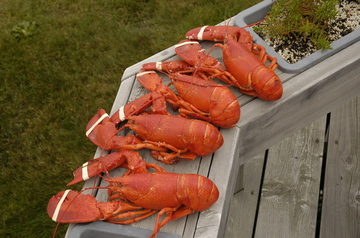 Bailey Island lobsters cooked.jpg