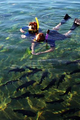Balmorhea snorkeling.jpg