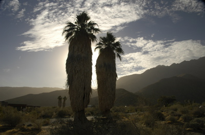 Borrego palm sunset.jpg