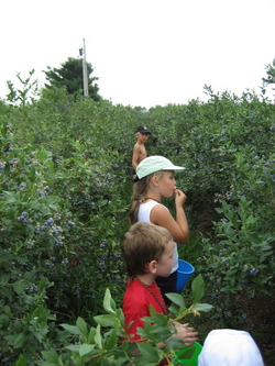 Charlotte blueberry picking.jpg