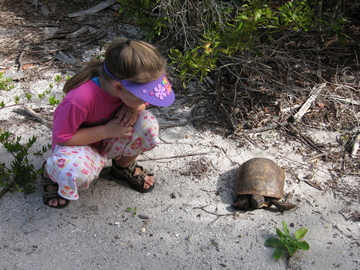 A young visitor meets a gopher tortoise on Egmont Key