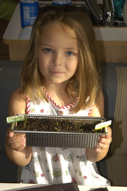 Emmas plants.jpg