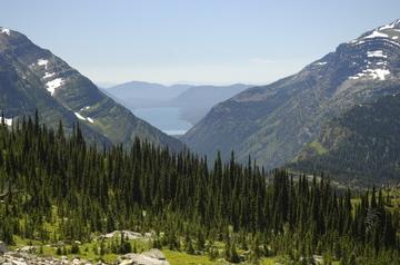 Glacier pines.jpg