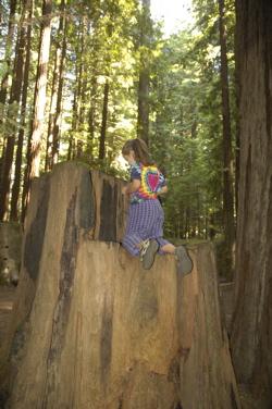 Humboldt Emma tree.jpg