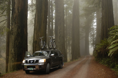 Nissan in redwoods.jpg