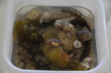 PP hermit crabs.jpg