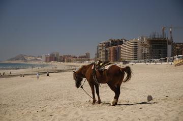 PP horse beach.jpg