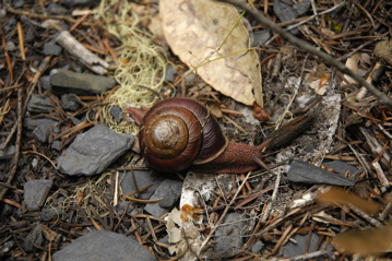 Roth Snail.jpg