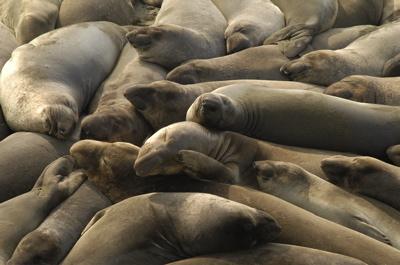 Rt 1 seals.jpg