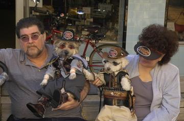 St Augustine Halloween dogs.jpg