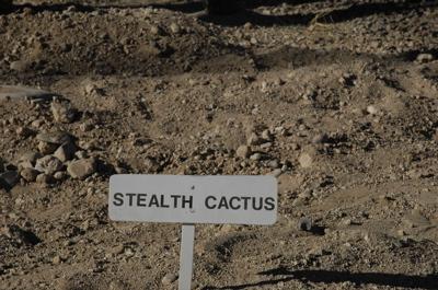 Stealthcactus.jpg