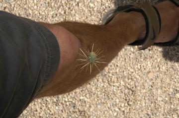 Tucson Botanical knee.jpg