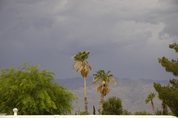 Tucson clouds palms.jpg