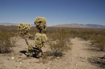Tucson desert walk.jpg