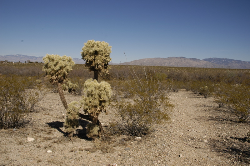 Gallery For Mexican Desert