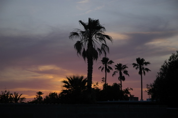Tucson sunset palms.jpg