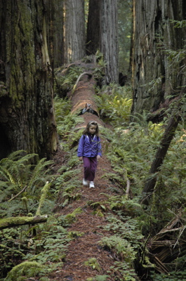 emma on redwood.jpg