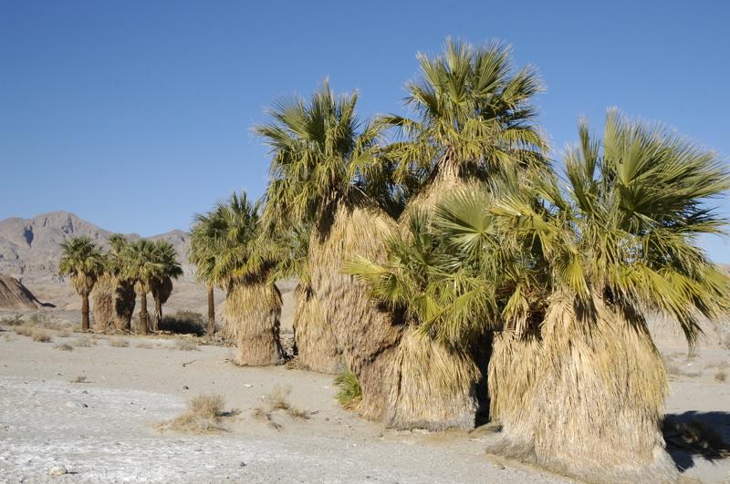 borrego-palm-oasis.jpg