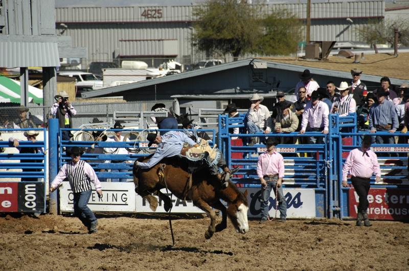 tucson-rodeo-bronco.jpg