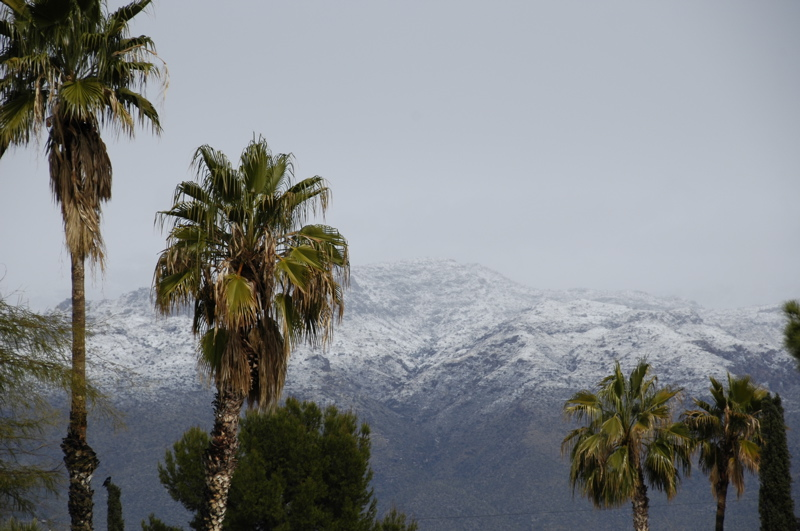 tucson-santa-catalina-snow-palm.jpg