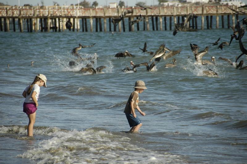 bahia-kino-kids-pelicans.jpg