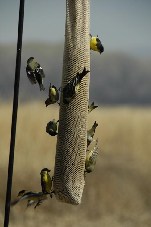 san-pedro-birds.jpg