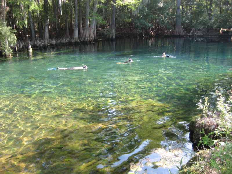 manatee-springs-sp.jpg
