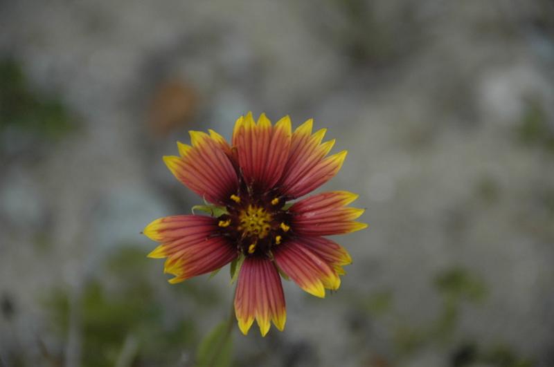 obx-flower.jpg